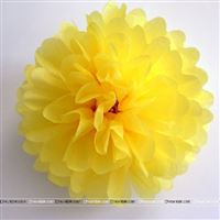 10inch Yellow Tissue Pom Pom