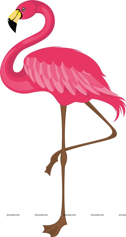 Standing Flamingo One Leg